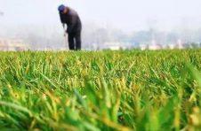发改委同意寿光市惠农新农村建设投资开发有限公司发行绿色债券不超过6亿元